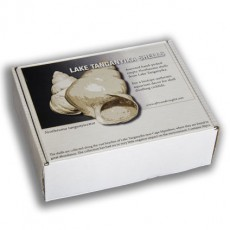 Lake Tanganyika shells, packet of 20 pcs