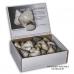 Lake Tanganyika shells, lot of 12 packets